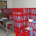 Priprema priplodnih jaja za transport